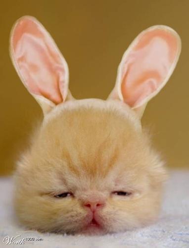 cat - cute cat in my country