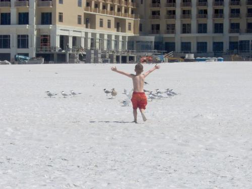 a day at the beach - this is my four year old son chasing the birds at clearwater beach.....something about it is just unique