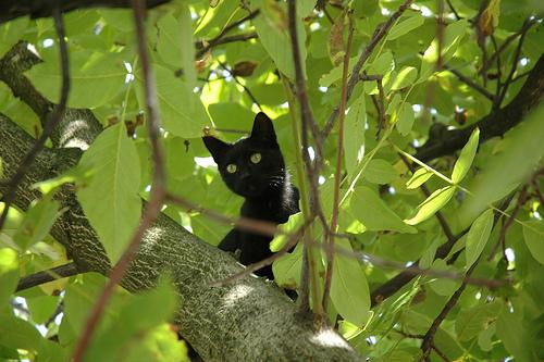 Tree Cat - aww