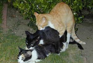 Three's A Crowd - Three's a crowd..