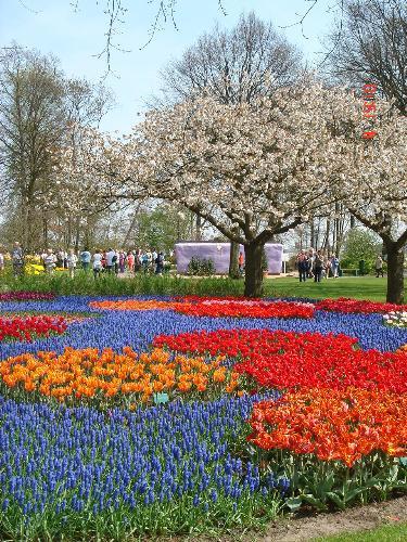 Keukenhof - Tulip paradise!