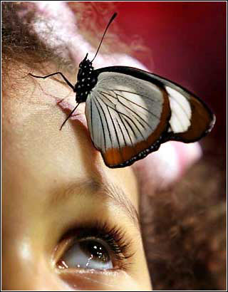 butterfly - the son of nature-butterfly