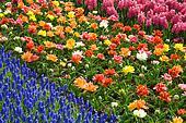 ... - flowers