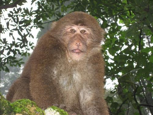 monkey - lovely