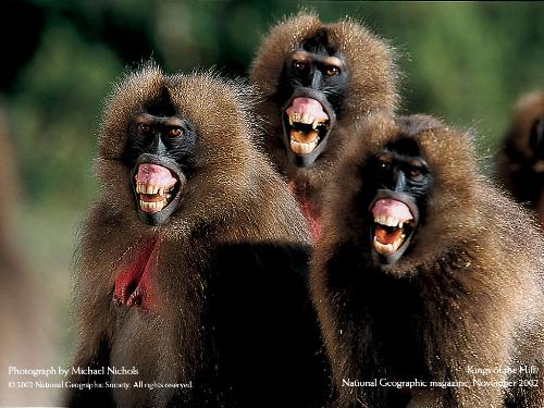 Happy Friends - three united monkeys