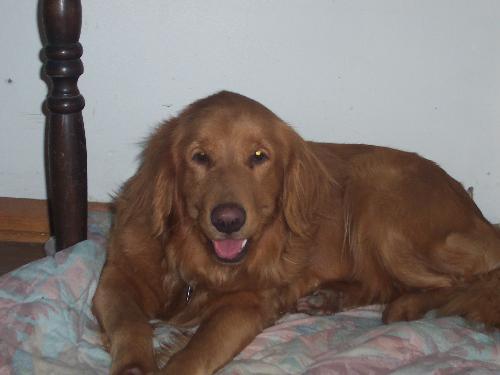 faith - My pretty little dog Faith