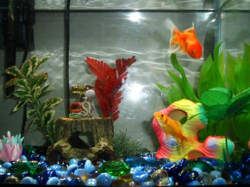 goldfish bowl. Our Goldfish Tank
