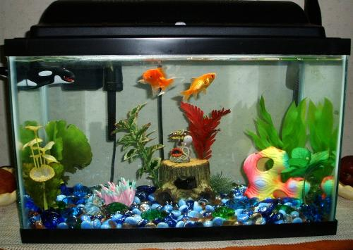 how to take care of fish tank on holiday