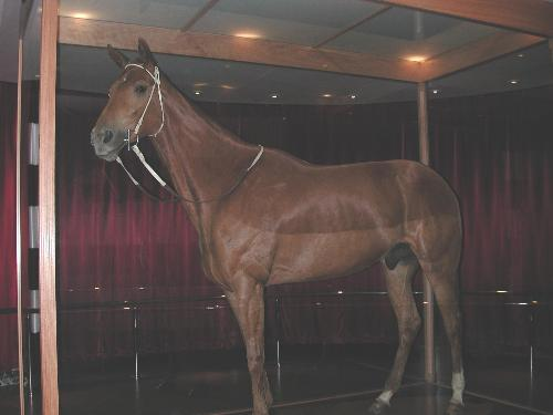 Phar Lap - Phar Lap the famous race horse at The Melbourne Museum.