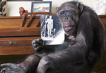 Chimpanzee is 75 years old. - Cheeta, the chimpanzee who stared in Dr. Do Little, is now 75 years old.