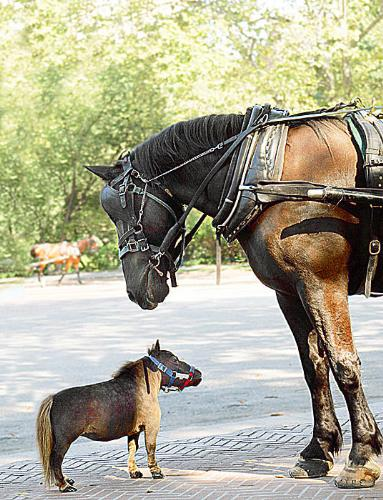 Meet Thumbelina! - The Smallest horse in the world!