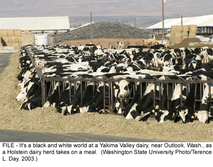 Milk production is good for health - Milk production in large quantity could improve the infant health of the nation!