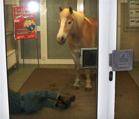 Horse Next to Sleeping Owner in Bank - New Type of Deposit?