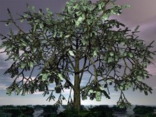 money tree on joinforcash yard - http://www.joinforcash.com/pages/index.php?refid=lovely