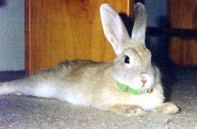 Rabbits spared further testing - How can any country inflict pain on an animal just to test cosmetics & washing liquid?