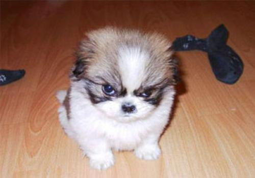 Gizmo? - Look at himmm!