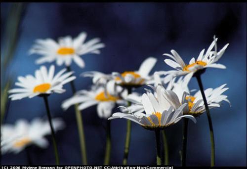 Lillies - See Wonderful water lilies. Beautiful