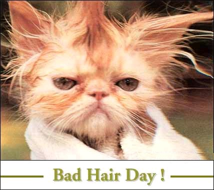bad hair - a picture of a bad hair cat