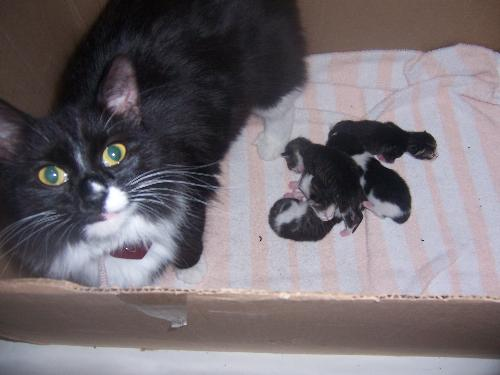 Belle and her Brood - Aren't they cute???