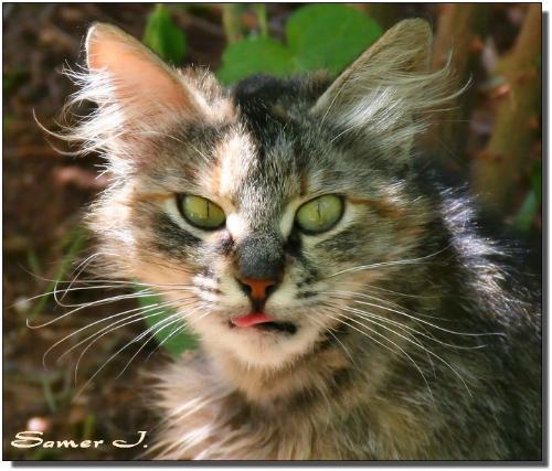 cat - cat is very friendly.