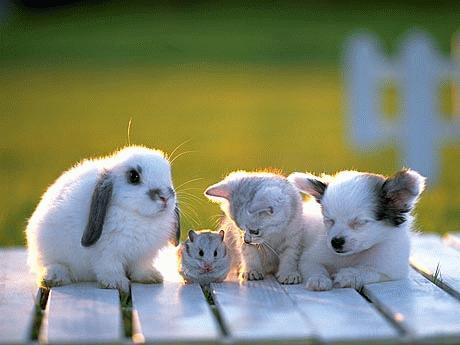 cute pets - cute pets all to geather