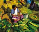 A vegitable vendor in Kerala. - Vegitables are full of vitamins and minerals. Millions of people around the world are vegitarians who do not eat meat or fish. Consuming various vegitables improve our immunity system too