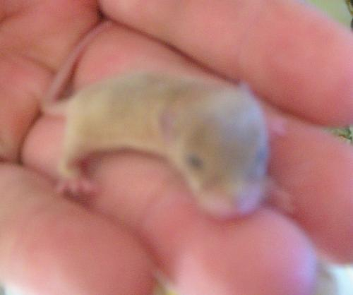 Mouse - A little tiny mouse! Isnt it cute!!