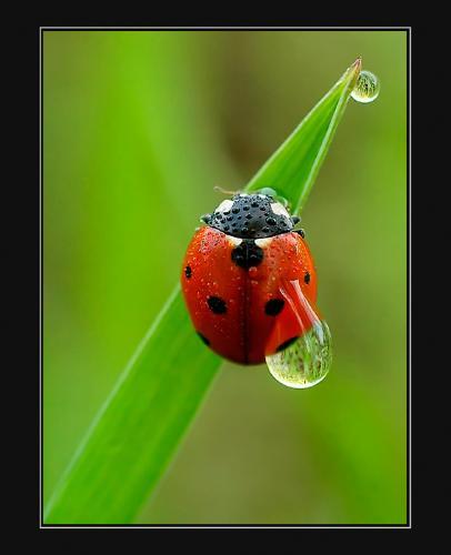 ladybug - I was a ladybug