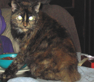 i eated it - my calico-yes,she always looks angry.