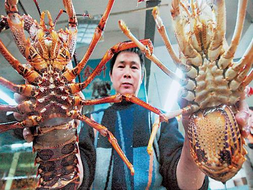 a very expensive seafood, lobster - a very expensive seafood, lobster, giant