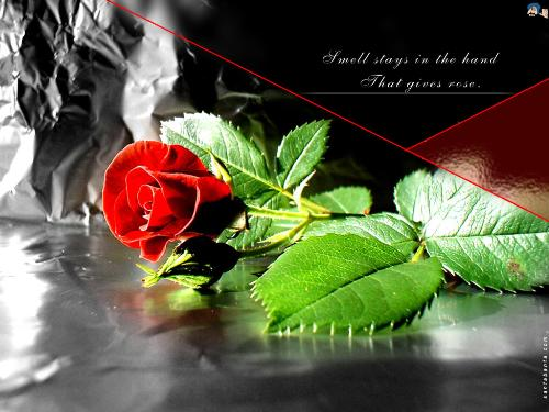 My Heartful Prayers -  This Red rose is an offering to GOD by me, on behalf of my FRIEND IN THE DISCUSSION.