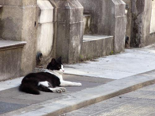 Wild Cat in Cemetery, Buenos Aires Argentina - This is a photo I took of one of the wild cats in the Cementerio de la Recoleta in Buenos Aires, Argentina. It is amazing how many wild cats are in this city, particularly here as well as in the Jardin Botanico (Botanical Gardens).