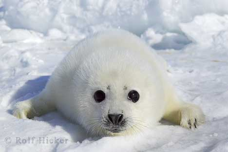 Do animals dream - This seal has just waken from a good dream