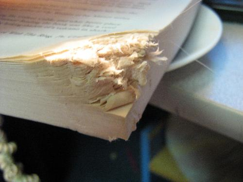 The corner of a book  -  My dog Yankee decided that this book would make a good teething ring .