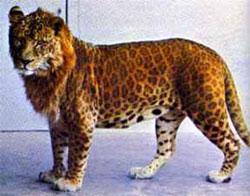leopon - leopon