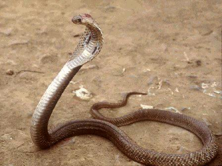 snake - fearsome.isnt it?