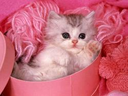 lovely cat or not? - Do you like this cat?