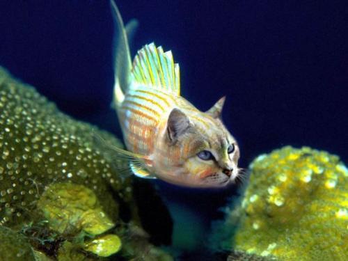 Catfish - How about a Catfish?...  Courtesy of Photoshoped animals.