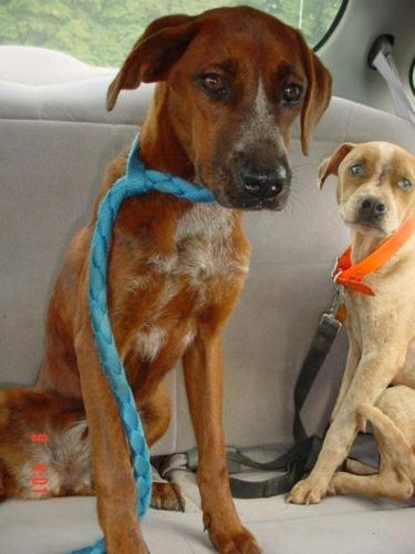 rosey a dog who is being taken to a vet - Rosey the dog is wounded and dying and she is being taken to the vet