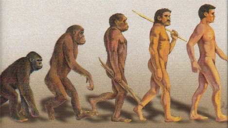 Evolution of man - A step by step evolution of ape to man