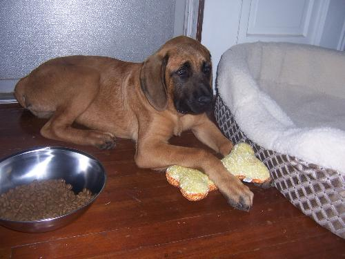 Samson - Isn't he cute???