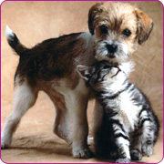 Cat and Dog - Image of a cat and dog together
