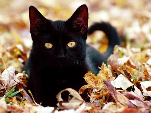 A black cat - A black cat is seen as a bad omen or bringer of bad luck while some cultures believe that they are magical cats that bring money.