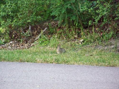 Bunny Rabbit in Highland Park - This lil guy was prowling around Highland Park when we took his picture.