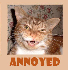 Image of an annoyed cat - annoyed image of a cat