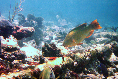 Plants under the sea - Plants under the sea and some fishes