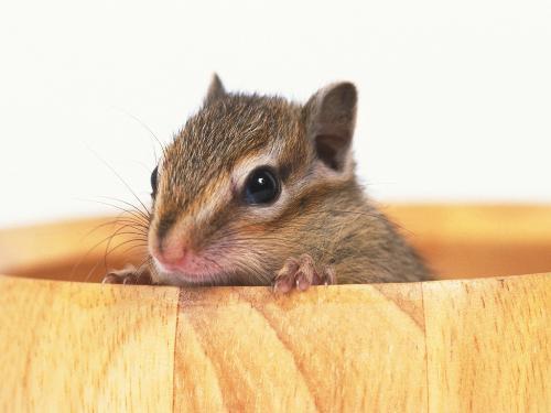 mouse 1 windows wallpapaer - mouse 1 desktop wallpaper