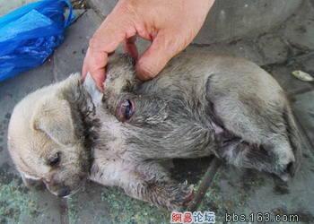 a puppy - a puppy's feet were cruelly cut off