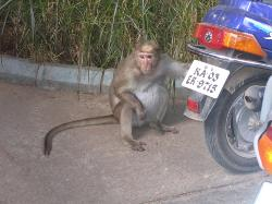 Monkey Matter - Can their mind be read or wish be guessed?