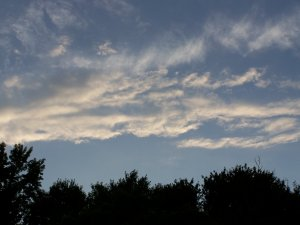 a view from my backyard - of a pretty dusk sky